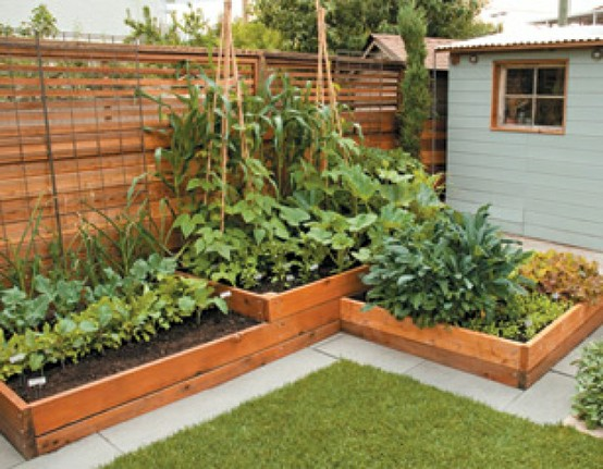 Backyard Raised Garden Ideas : More design ideas in Backyard , Raised Garden Bed